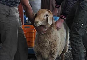افزایش نظارت بهداشتی و شرعی در عید قربان
