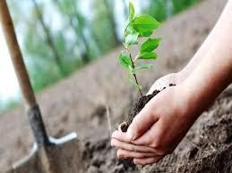 توسعه کشت باغات در اراضی شیبدار دژکرد