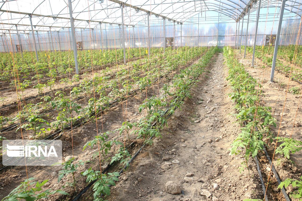 مجوز احداث ۱۲۷ هکتار گلخانه در اقلید صادر شد