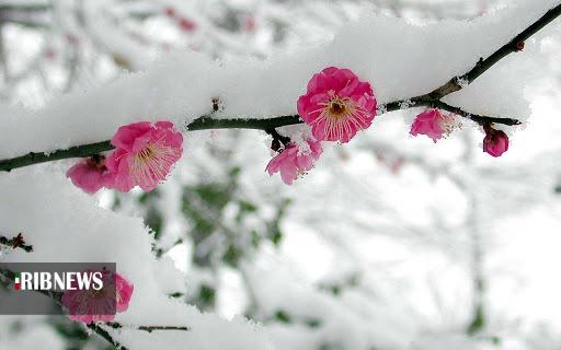 معرکه گیری زمستان در بهار شیراز