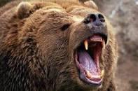حمله خرس یک نفر را در کوه های اقلید مجروح کرد