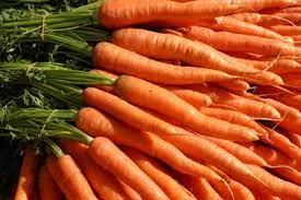 کشت هویج در اقلید