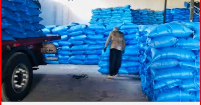 تأمین کود شیمیائی ازته مورد نیاز مزارع گندم و جو در شهرستان اقلید