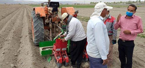 پیش بینی افزایش کاشت هویج در اقلید