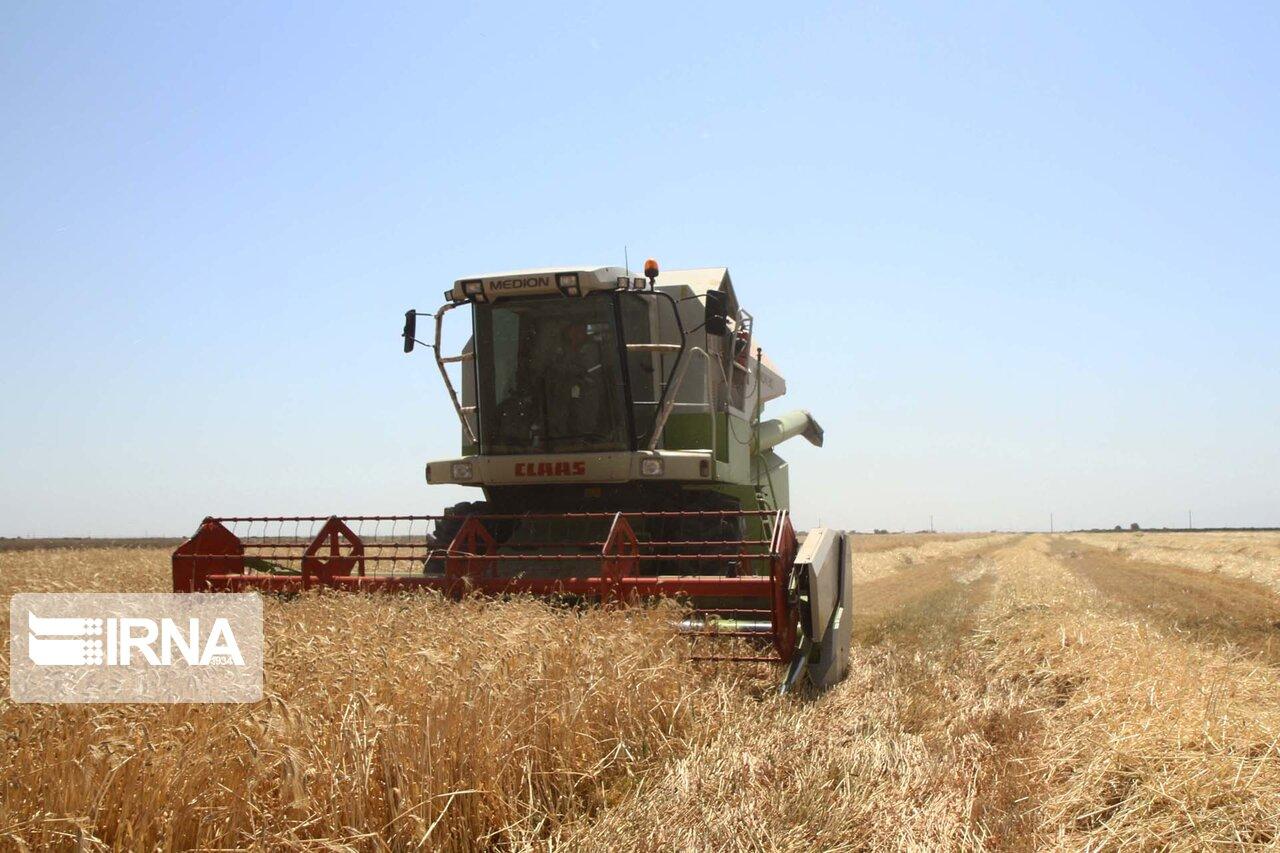 پیشبینی برداشت ۲۲ هزار تن جو از مزارع شهرستان اقلید