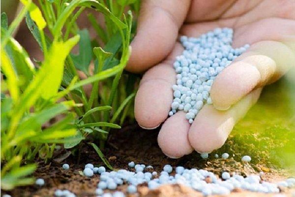 تلاش ها در راستای کاهش بی رویه مصرف سموم کشاورزی ادامه دارد