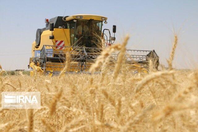 کمبود بارش،میزان خرید گندم تضمینی را در فارس کاهش داد