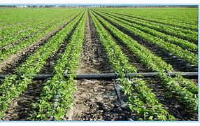 پرداخت بیش از ۱۳ میلیارد ریال تسهیلات در بخش کشاورزی اقلید