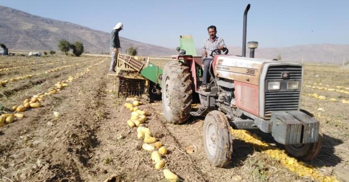 دشت بکان قطب تولید کدو آجیلی در شهرستان اقلید استان فارس است