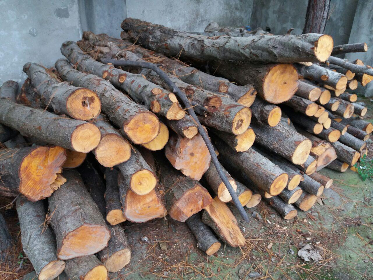 کشف چوب قاچاق در اقلید