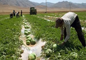 هدر رفت آب توسط هندوانهکاران غیربومی/ هندوانههایی که ۴۰۰ هزار تومان