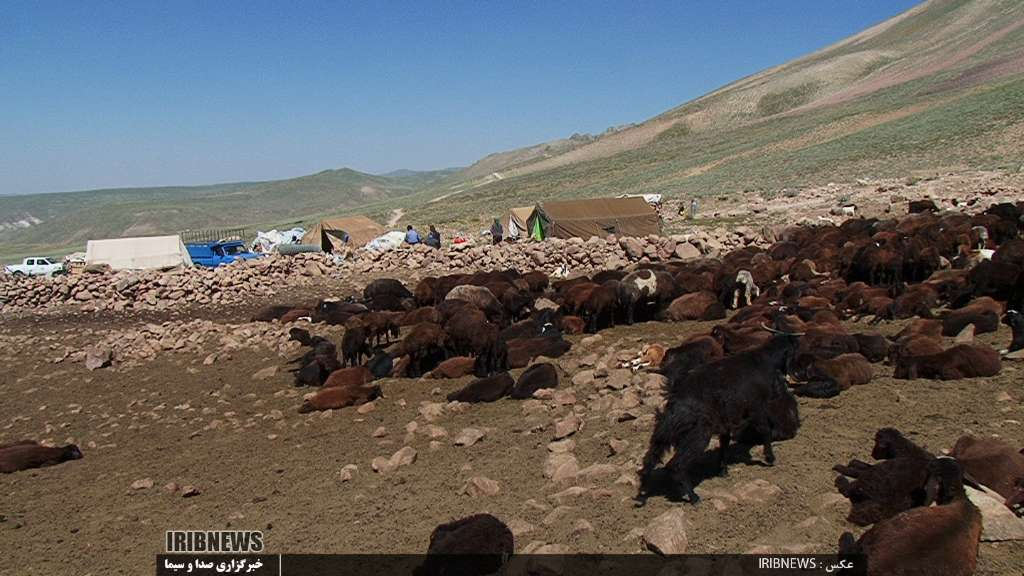 عشایر کوچ رو در راه مناطق جنوبی فارس