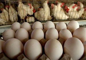تولید روزانه 7 تن تخممرغ در اقلید
