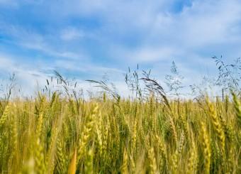 اجرای طرح امید در بخش کشاورزی اقلید