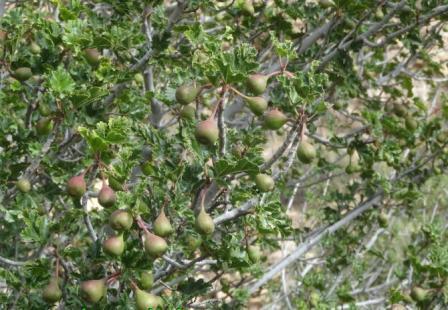 دانشکده کشاورزی شیراز قابلیت تولید گونه های گیاهی کمیاب جنگلی را دارد