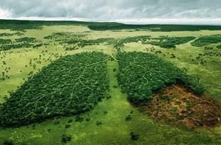لزوم حفاظت از طبیعت در راستای حفظ حیات و رونق زندگی در اقلید