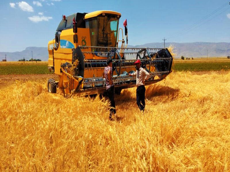 پیش بینی برداشت ۷۰ هزار تن گندم از کشتزارهای شهرستان اقلید