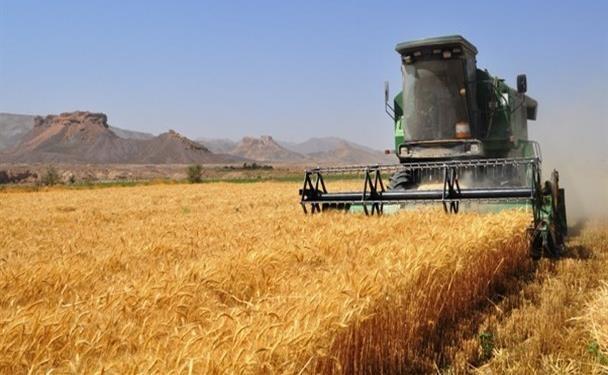 برداشت ۱۰۸ تن گندم از مزرعه تحقیقاتی دانشگاه آزاد اسلامی اقلید