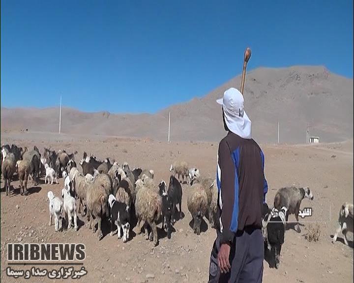 کوچ بزرگترین جامعه عشایری کشور در فارس از ۱۵ مهر