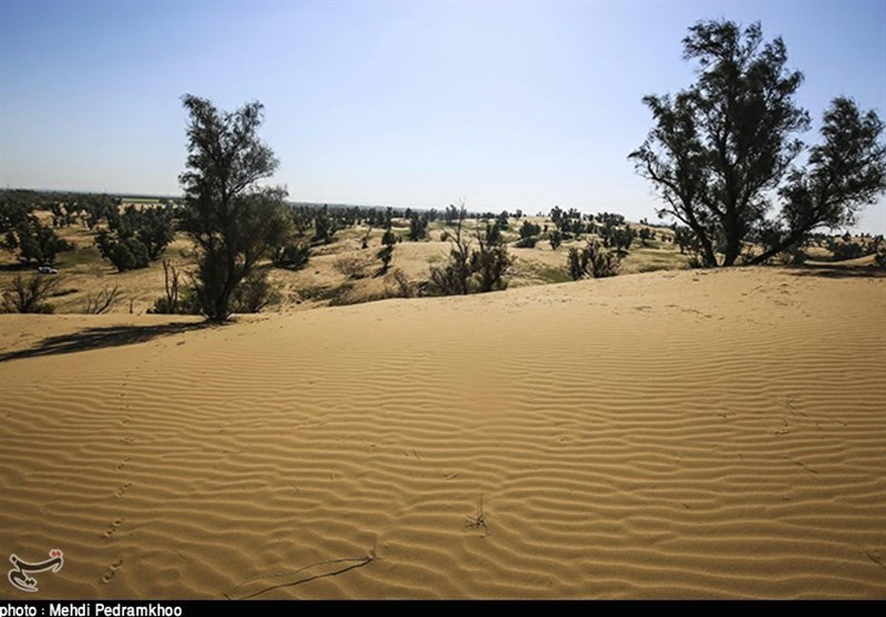 رتبه دهم استان فارس در عرصههای بیابانی؛ زنگ خطر گسترش بیابان به صدا درآمد