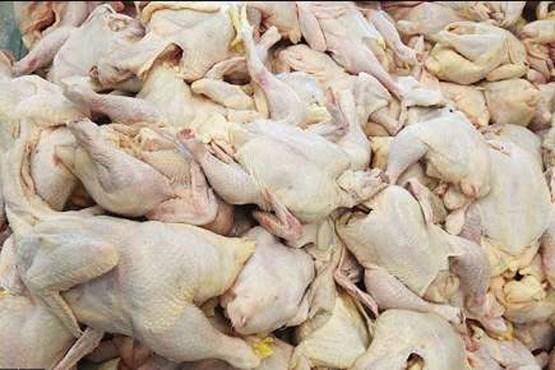 کشف مرغ های غیربهداشتی در اقلید