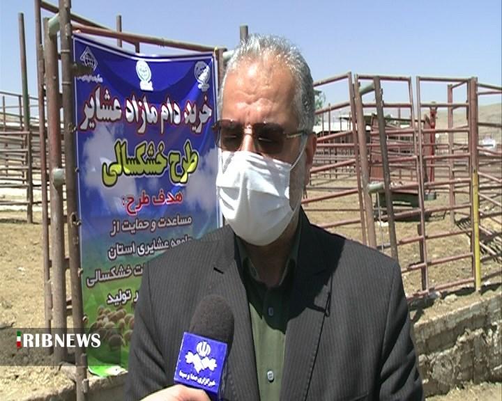 خرید دام مازاد عشایر در فارس